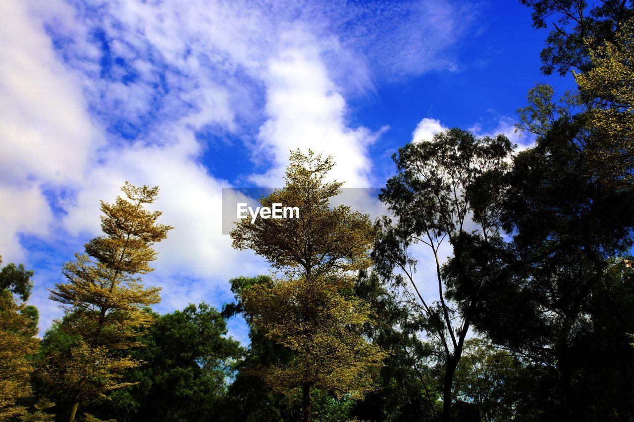 tree, low angle view, nature, beauty in nature, sky, growth, scenics, tranquility, forest, day, outdoors, no people, cloud - sky, tranquil scene