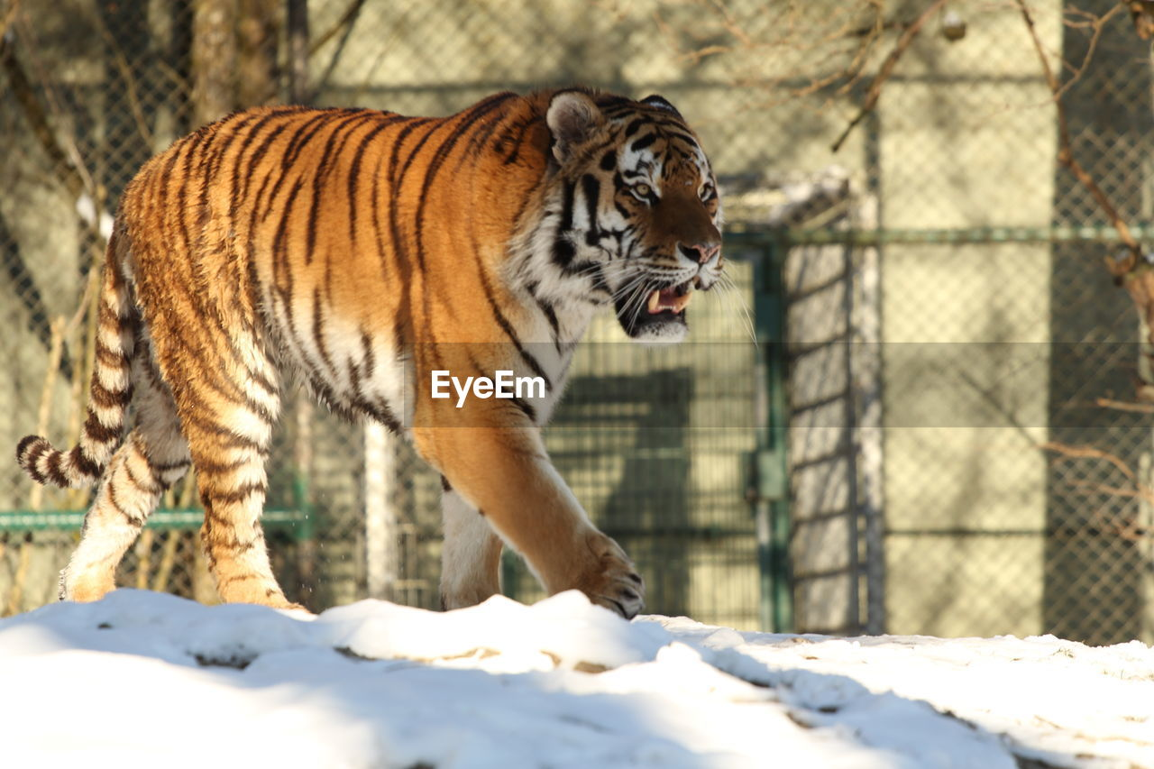 View Of Tiger In Zoo