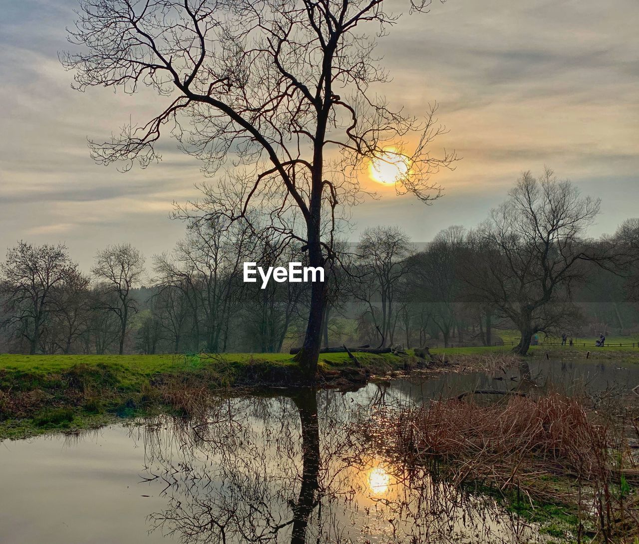tree, water, reflection, tranquility, plant, sky, beauty in nature, scenics - nature, tranquil scene, cloud - sky, no people, nature, bare tree, sunset, lake, non-urban scene, outdoors, branch, idyllic, hazy