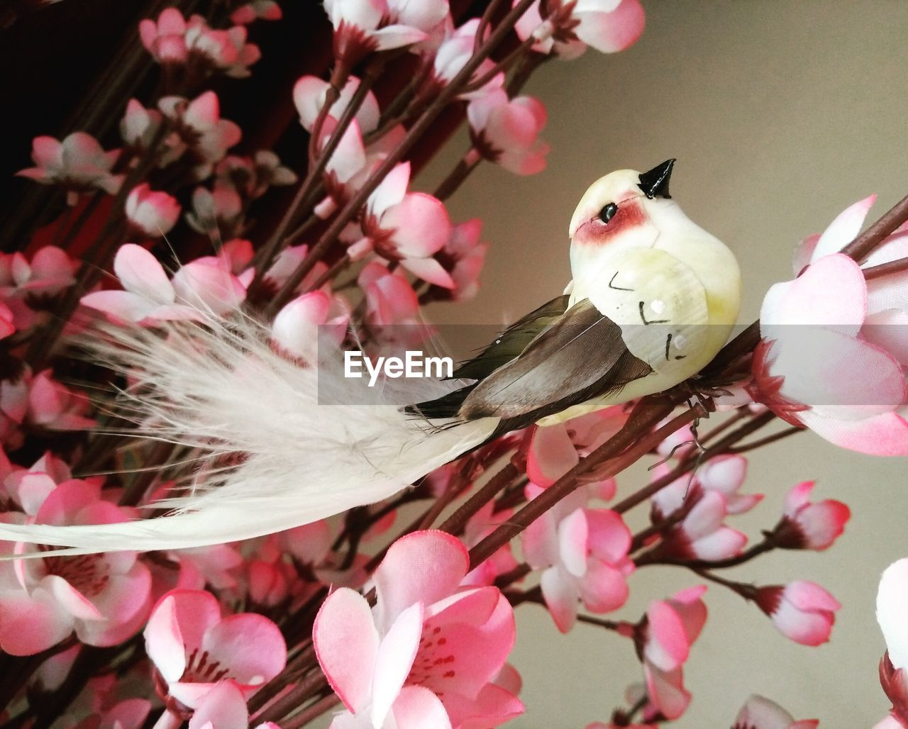 flower, flowering plant, plant, freshness, growth, fragility, beauty in nature, vulnerability, pink color, petal, close-up, flower head, one animal, inflorescence, blossom, nature, animal themes, animal, no people, branch, springtime, cherry blossom, outdoors, pollen, cherry tree