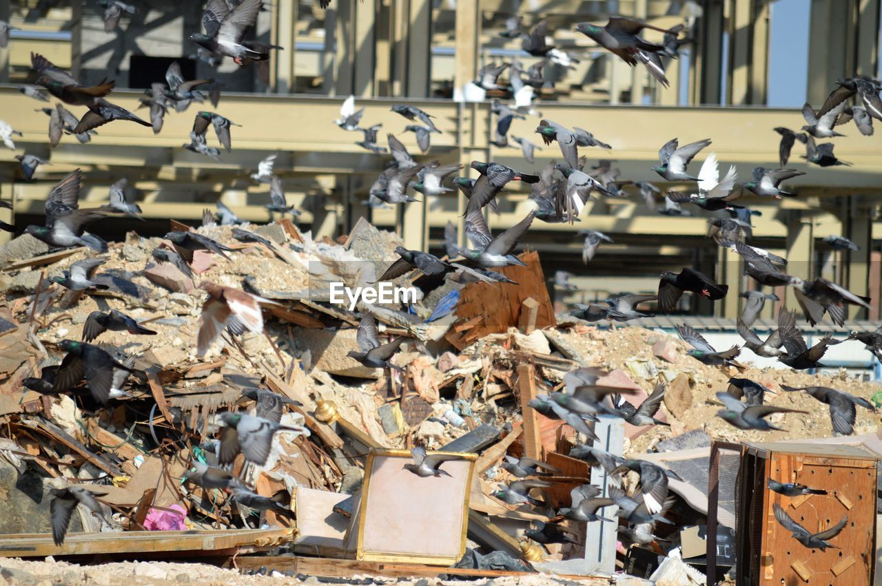 large group of objects, abundance, no people, metal, abandoned, day, stack, heap, indoors, focus on foreground, damaged, sunlight, business, junkyard, wood - material, obsolete, nature, old, close-up
