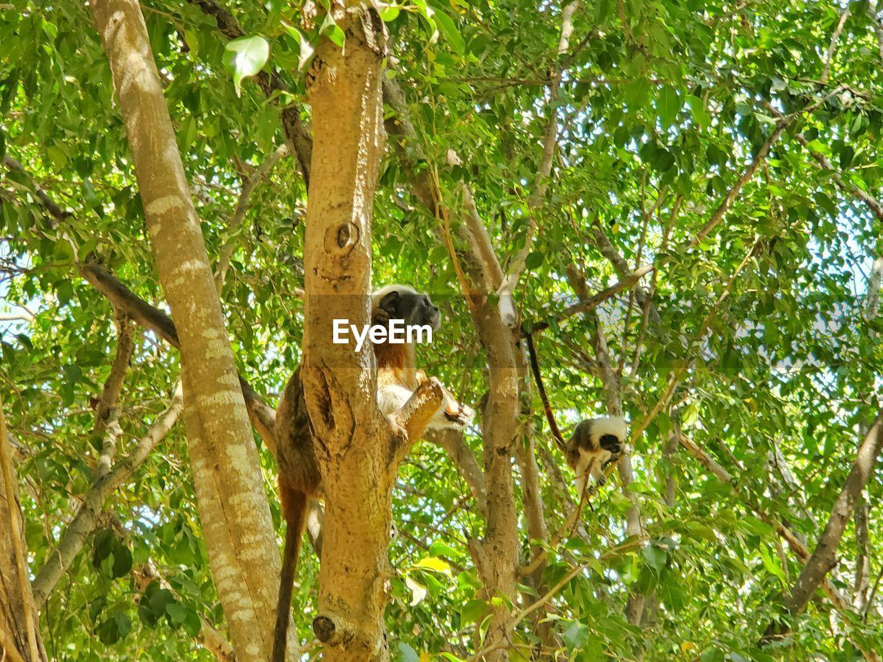 MONKEY ON TREE BRANCH