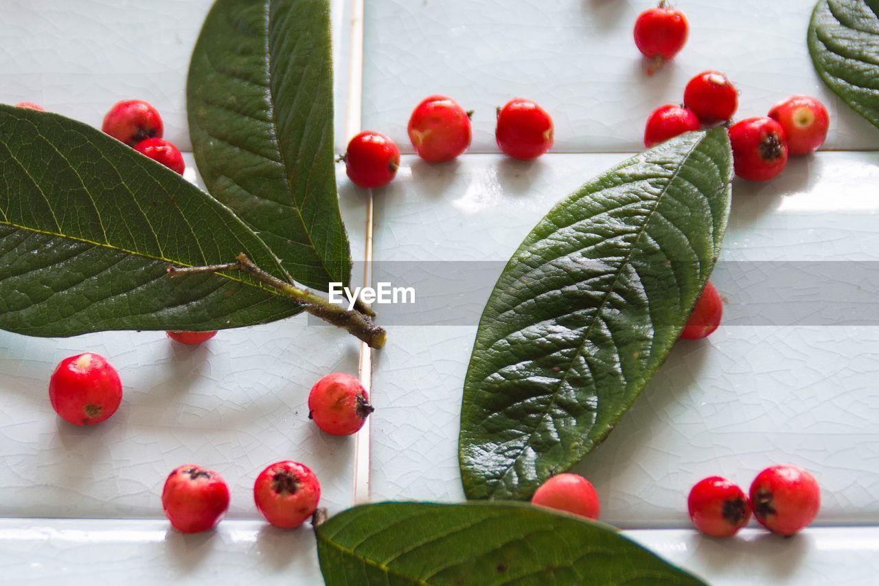 Close-up of red berries on table