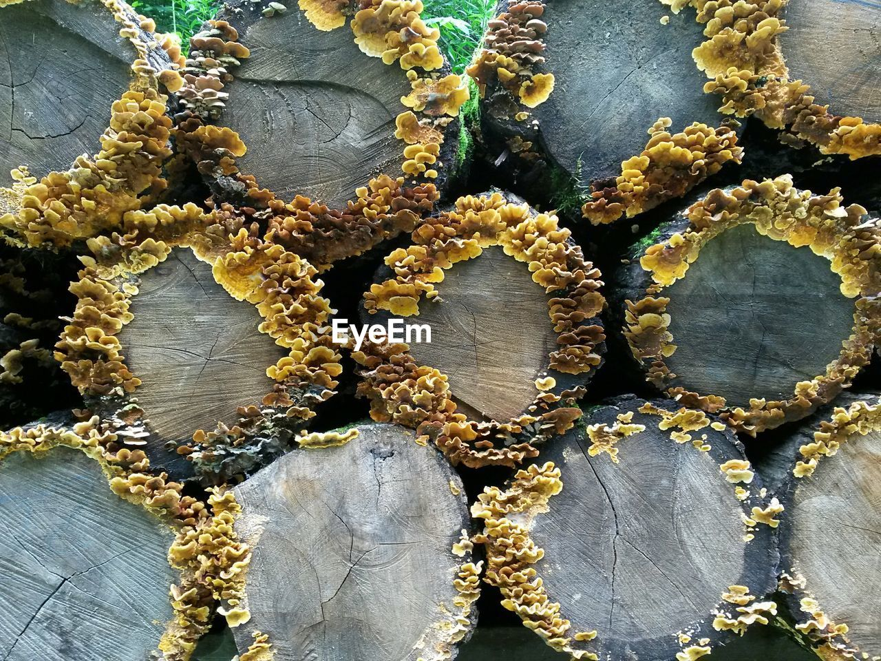 Full Frame Shot Of Logs With Fungus