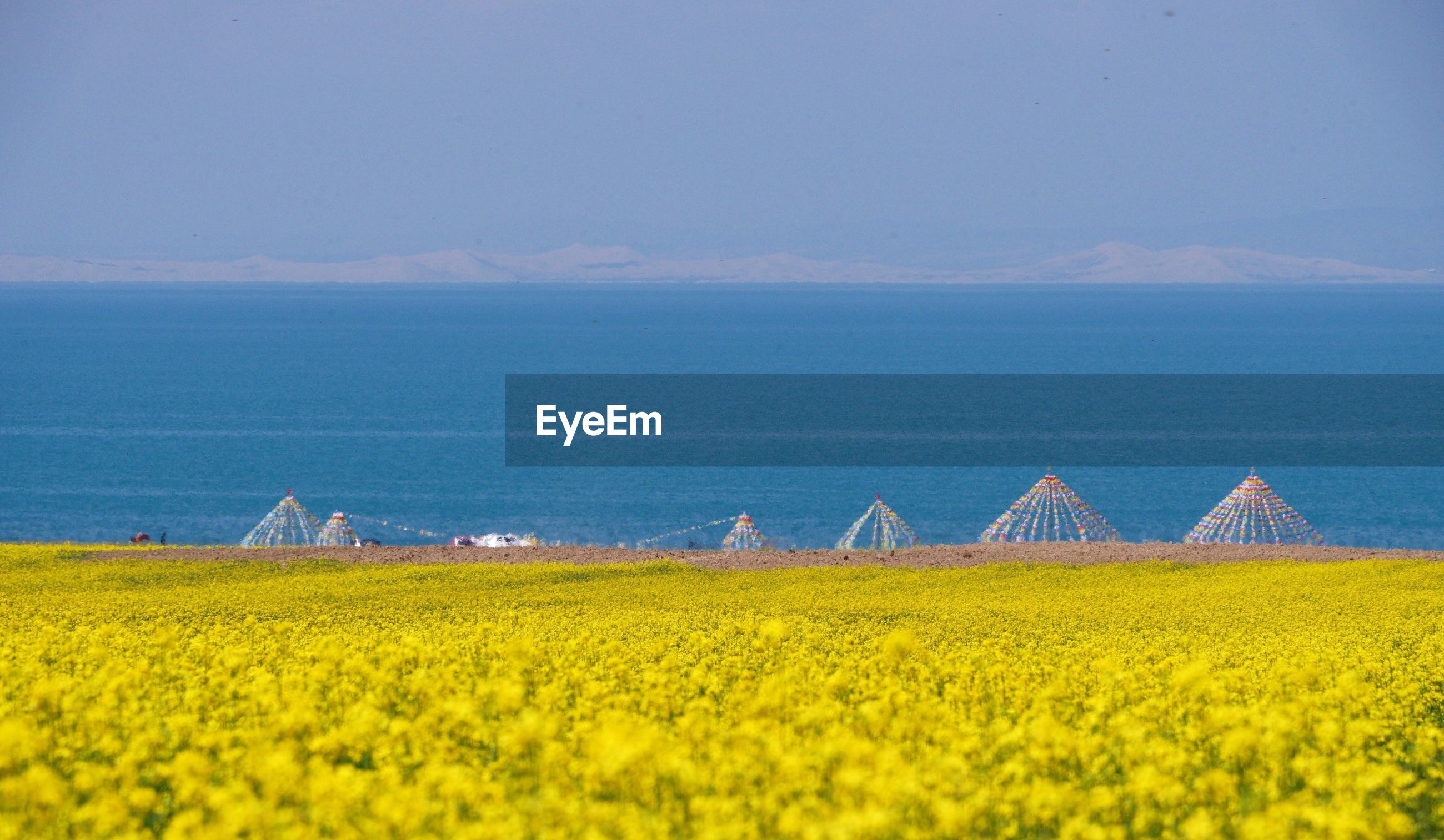 Scenic view of oilseed rape field by qinghai lake against sky