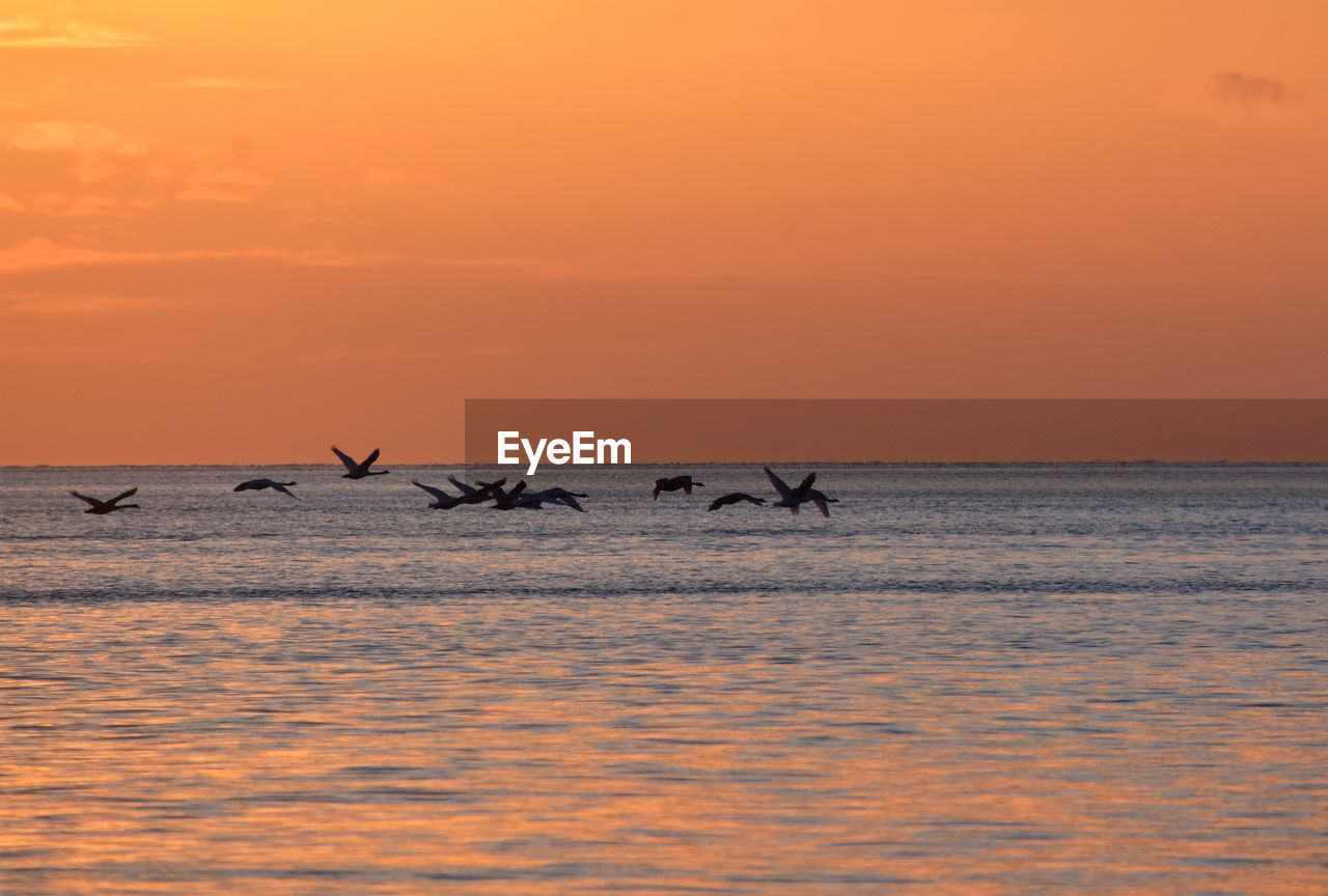 sunset, orange color, sky, water, scenics - nature, beauty in nature, animal themes, animal, sea, animals in the wild, horizon, group of animals, animal wildlife, horizon over water, vertebrate, waterfront, tranquil scene, no people, nature, outdoors, flock of birds