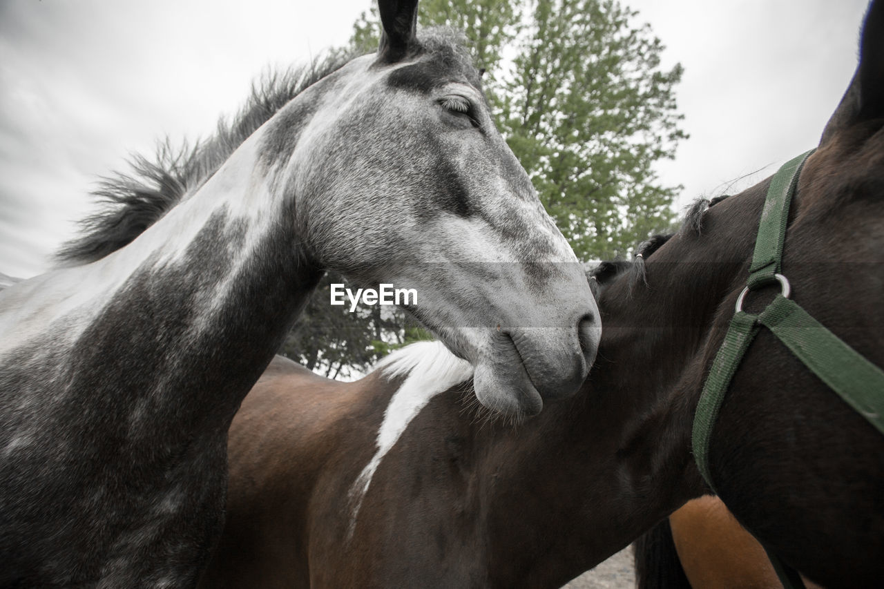 Horses Against Tree
