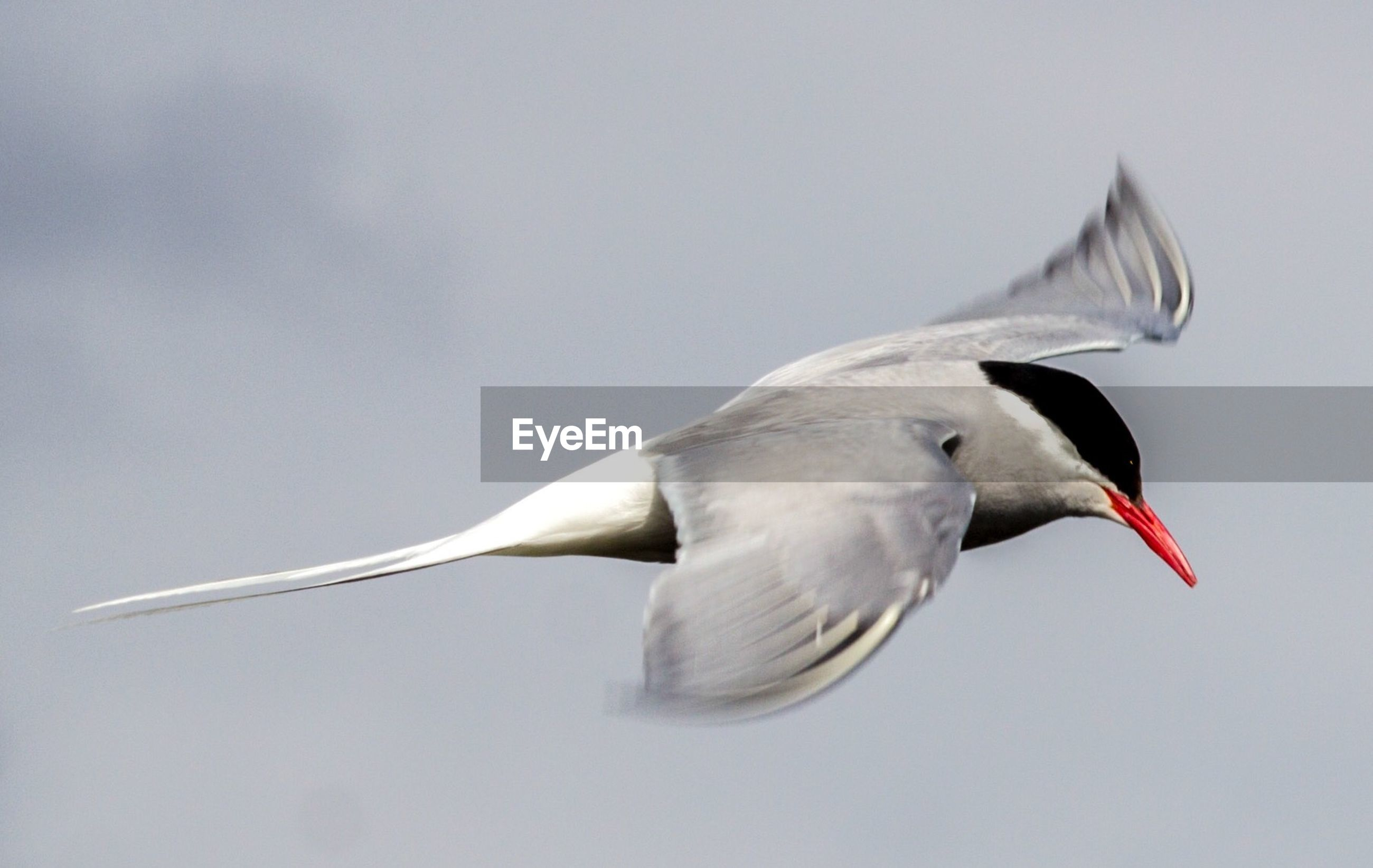 LOW ANGLE VIEW OF WHITE BIRD FLYING IN SKY