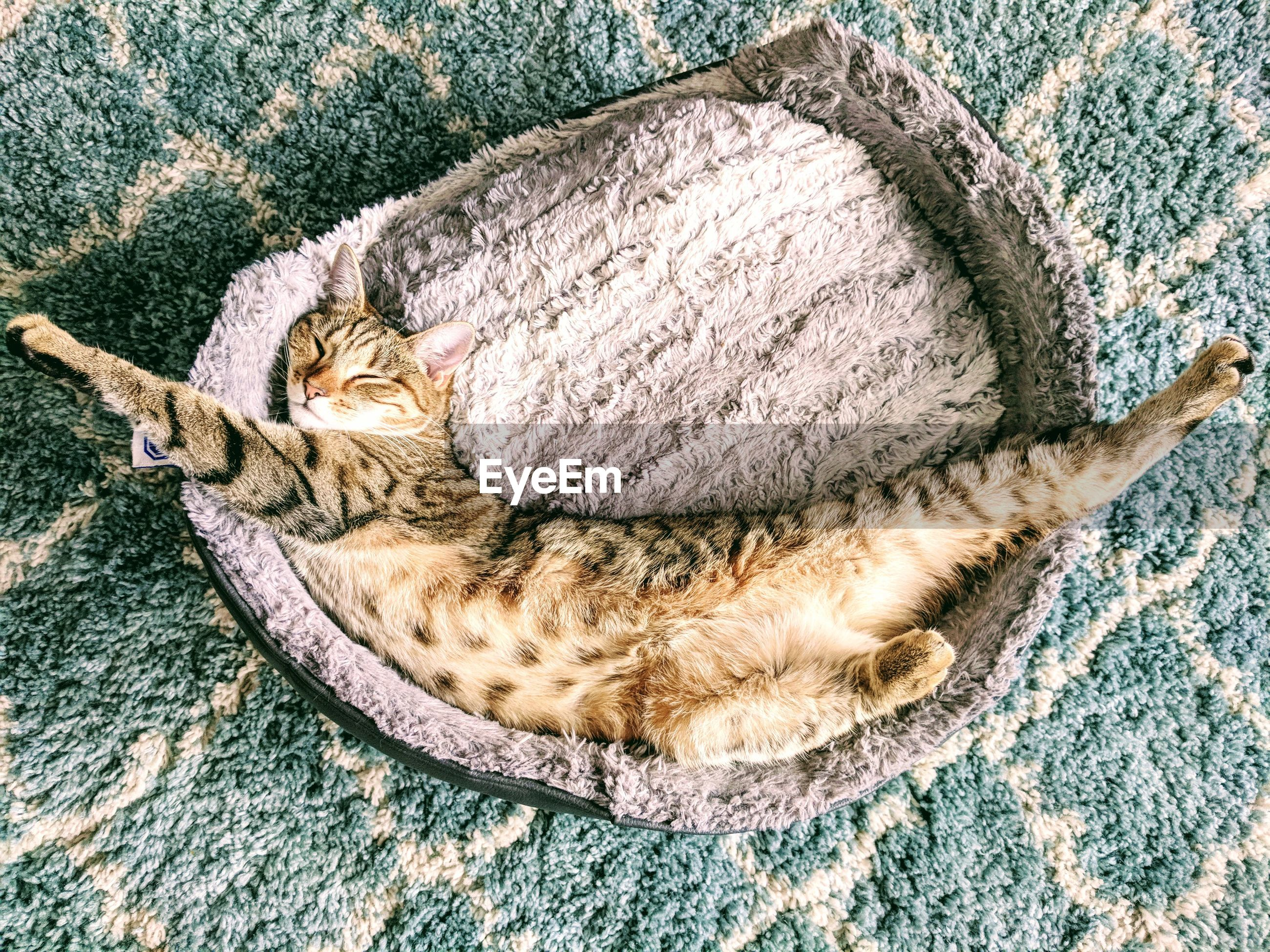 High angle view of cat sleeping on pet bed at home