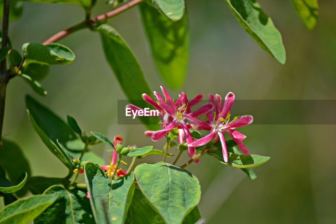 leaf, growth, plant, nature, beauty in nature, green color, freshness, fragility, petal, day, flower, no people, outdoors, flower head, close-up, blooming
