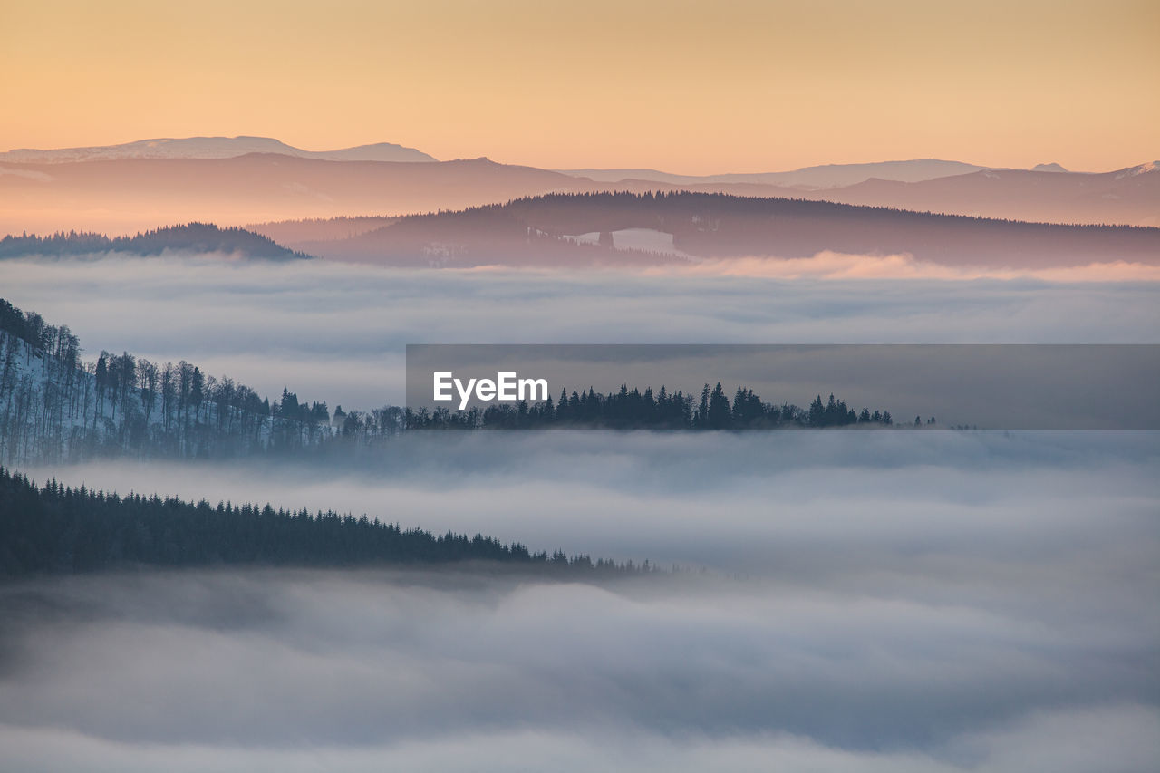 Winter landscape from rodnei mountains. foggy mornings with pine trees in the frozen national park.
