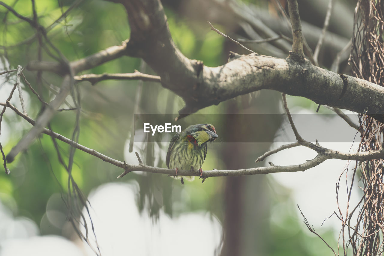 bird, vertebrate, animal themes, animal, tree, animals in the wild, animal wildlife, one animal, branch, plant, perching, nature, focus on foreground, selective focus, day, no people, outdoors, bare tree, songbird, green color, woodpecker