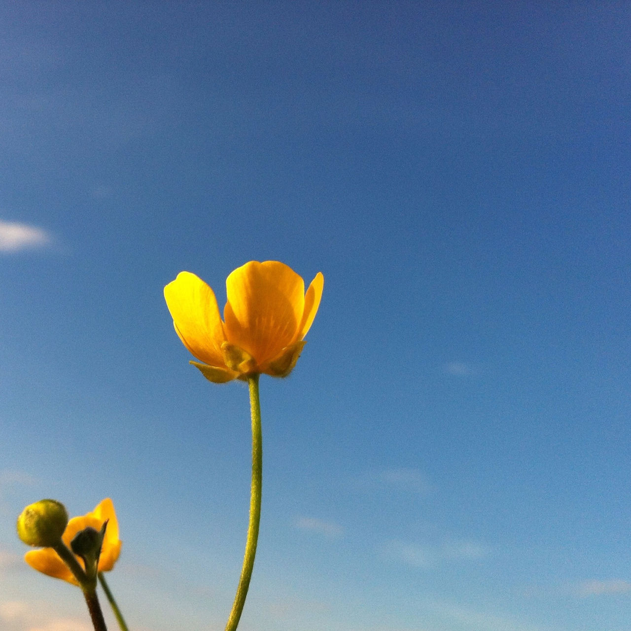 Low angle view of yellow flower against blue sky