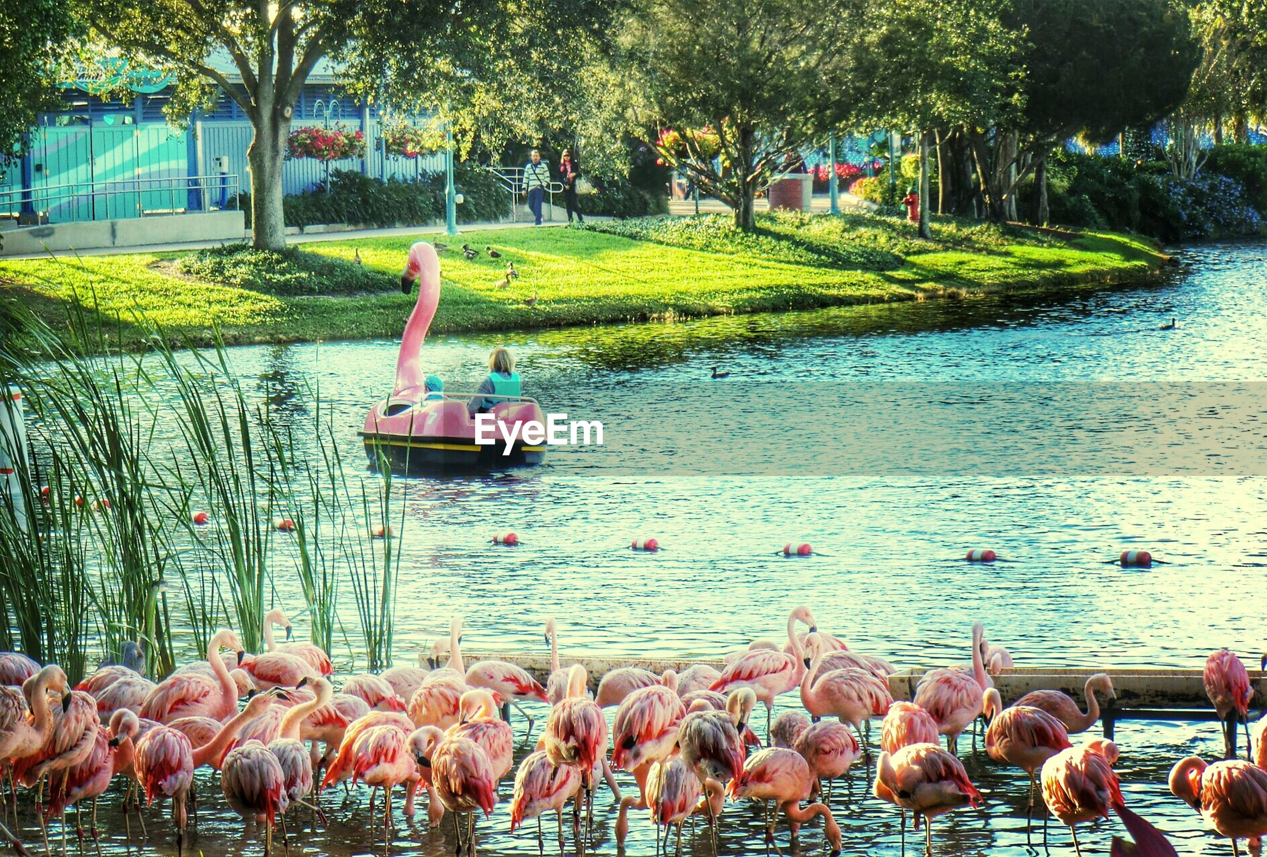 water, bird, animal themes, tree, wildlife, animals in the wild, nature, day, outdoors, lake, medium group of animals, flock of birds, duck, pond, sunlight, beauty in nature, grass, large group of people