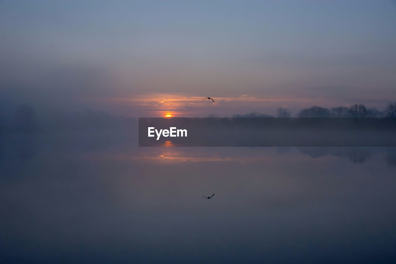 sunset, sky, beauty in nature, scenics - nature, flying, bird, vertebrate, animal themes, animal, orange color, tranquility, tranquil scene, water, cloud - sky, animals in the wild, animal wildlife, nature, mid-air, idyllic, no people, sun, outdoors
