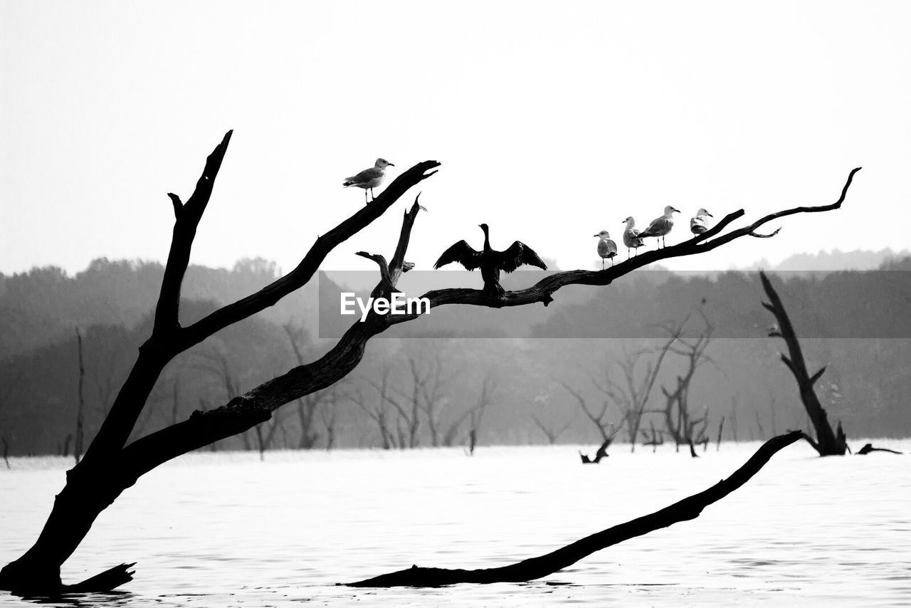 nature, lake, beauty in nature, outdoors, tranquility, water, branch, bare tree, scenics, no people, day, tree, sky, dead tree, bird