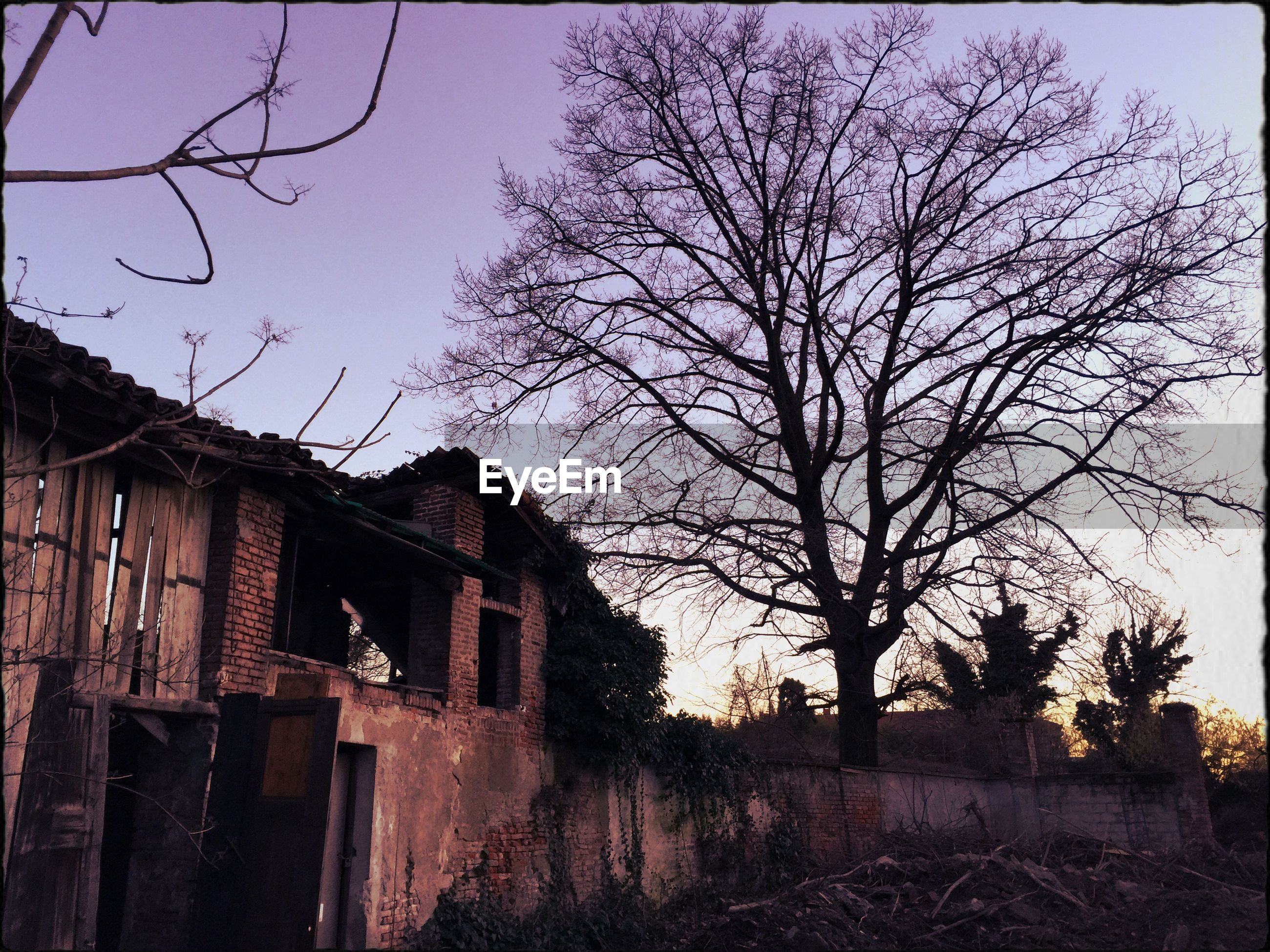 bare tree, built structure, architecture, clear sky, building exterior, tree, low angle view, branch, house, sky, fence, outdoors, old, no people, nature, field, residential structure, silhouette, day, sunlight