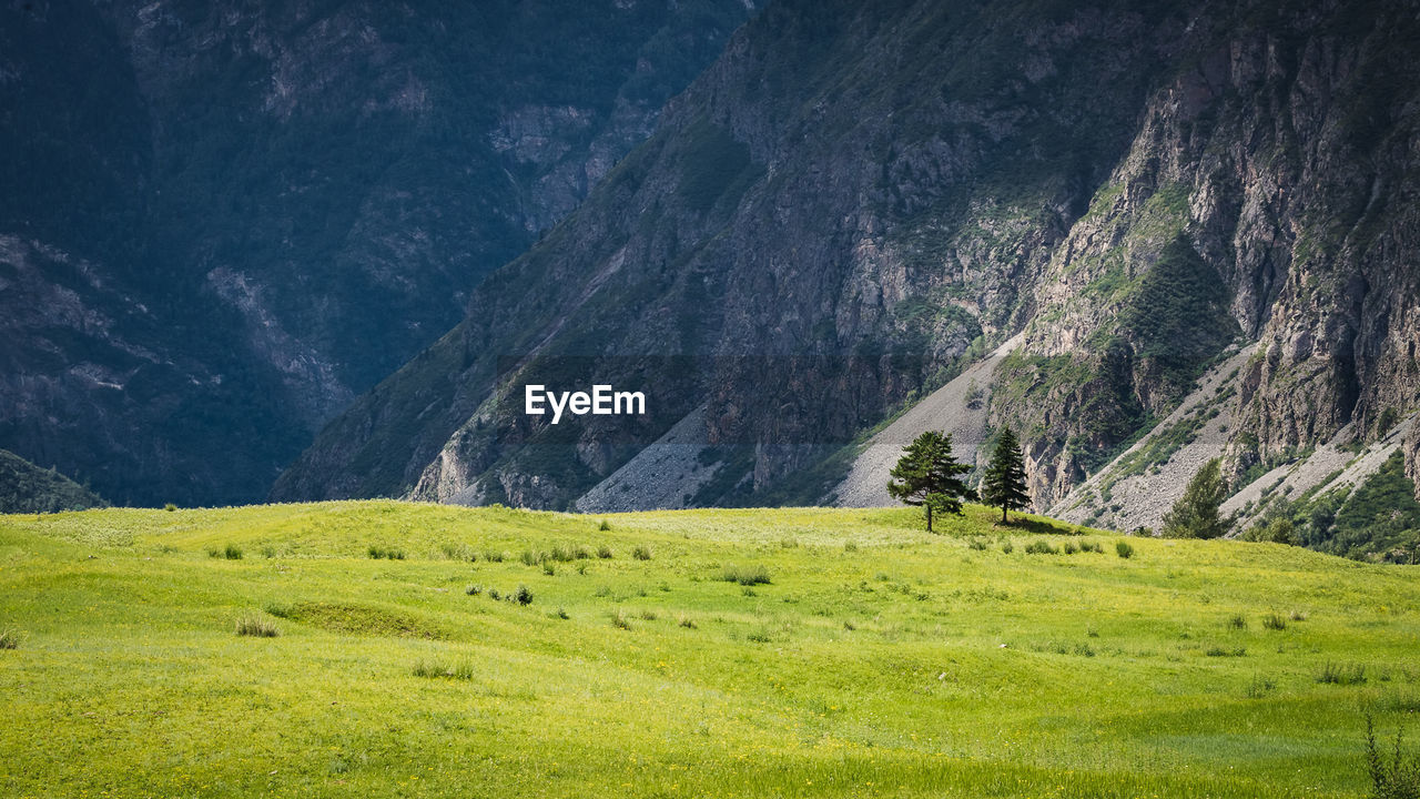 Scenic view of green landscape by mountain