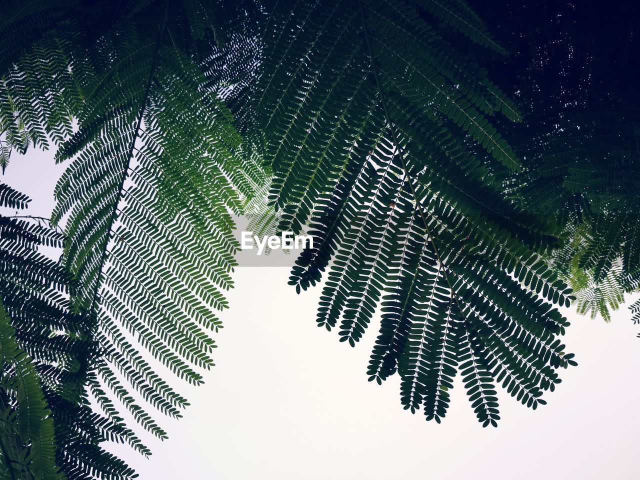 nature, tree, growth, beauty in nature, green color, leaf, day, low angle view, no people, outdoors, forest, plant, close-up, sky, freshness