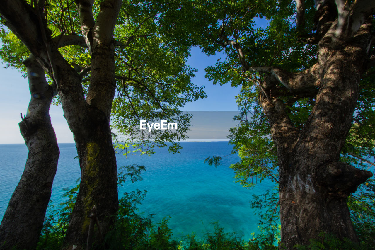 tree, plant, trunk, tree trunk, beauty in nature, tranquility, nature, water, sky, scenics - nature, growth, tranquil scene, no people, day, blue, sea, outdoors, branch, idyllic, turquoise colored