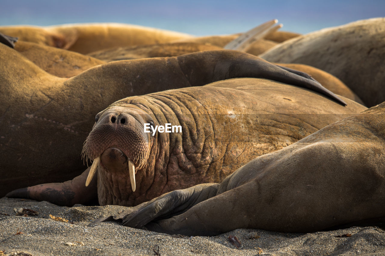 Sea lions relaxing on beach