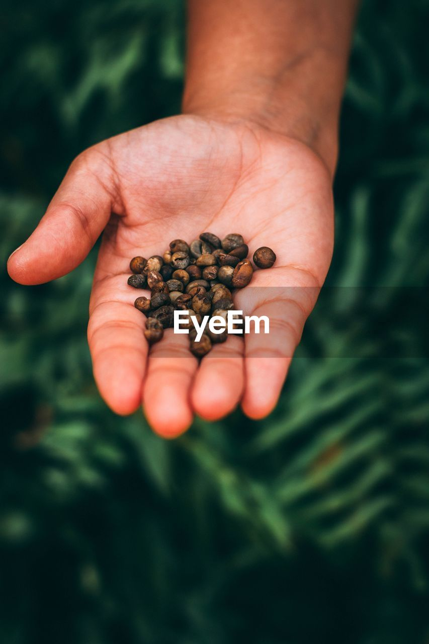 Close-Up Of Hand Holding Raw Coffee Beans