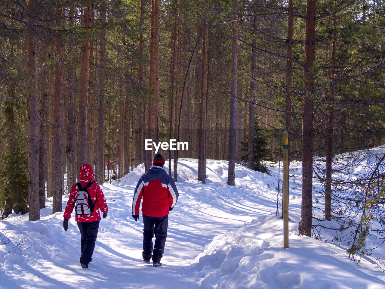 Rear View Of People Walking On Snow Covered Land Amidst Tree Trunks