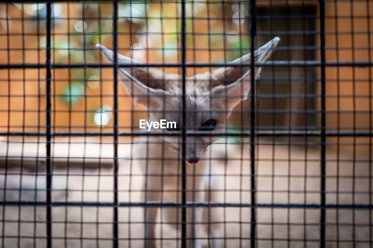 animal themes, mammal, one animal, animal, focus on foreground, animals in captivity, cage, no people, vertebrate, looking at camera, domestic animals, portrait, pets, close-up, domestic, day, cat, metal, fence, barrier, animal head, whisker
