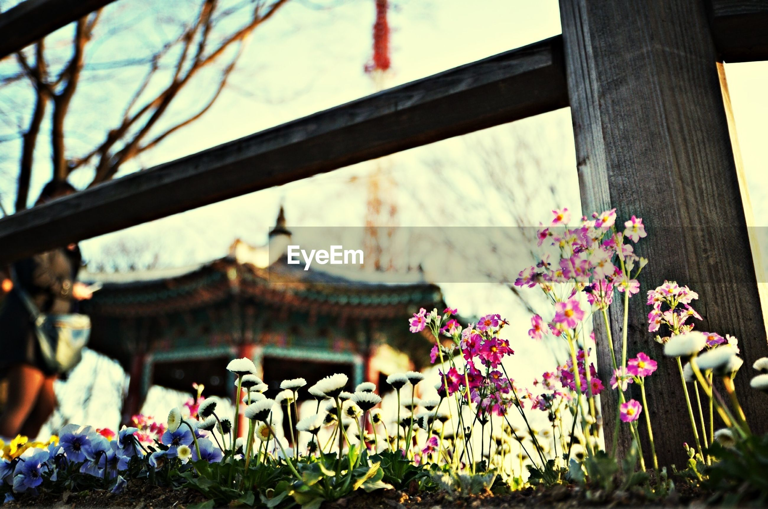 flower, plant, fragility, religion, place of worship, focus on foreground, freshness, spirituality, petal, blooming, built structure, architecture, growth, temple - building, building exterior, in bloom, nature, close-up, beauty in nature, pink color