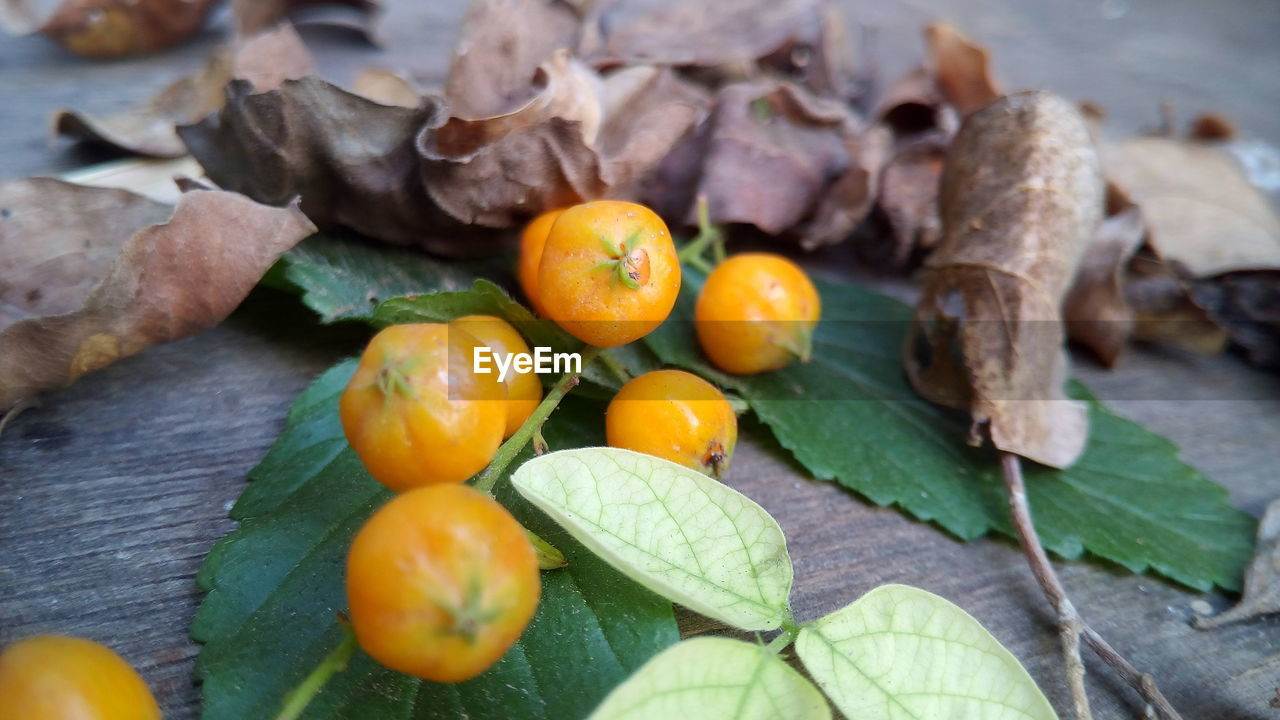 Close-Up Of Fruits With Leaves On Table