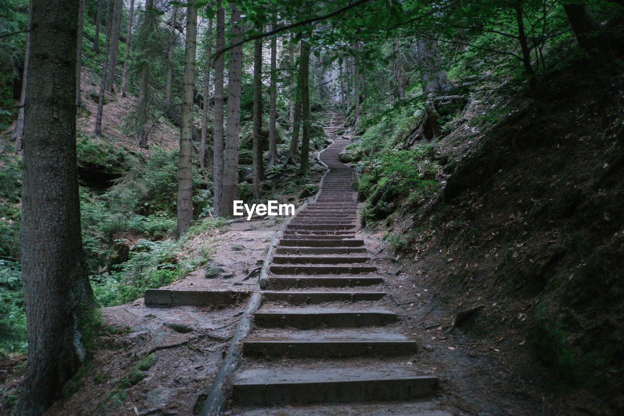 direction, forest, the way forward, tree, plant, land, day, no people, nature, staircase, steps and staircases, tranquility, growth, outdoors, architecture, non-urban scene, scenics - nature, solid, transportation, footpath, diminishing perspective, woodland