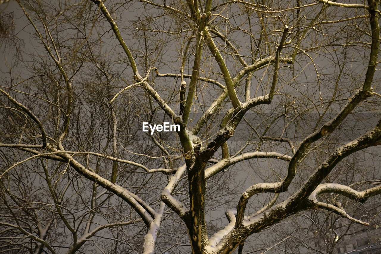 bare tree, branch, tree, no people, outdoors, nature, day, beauty in nature, sky, close-up