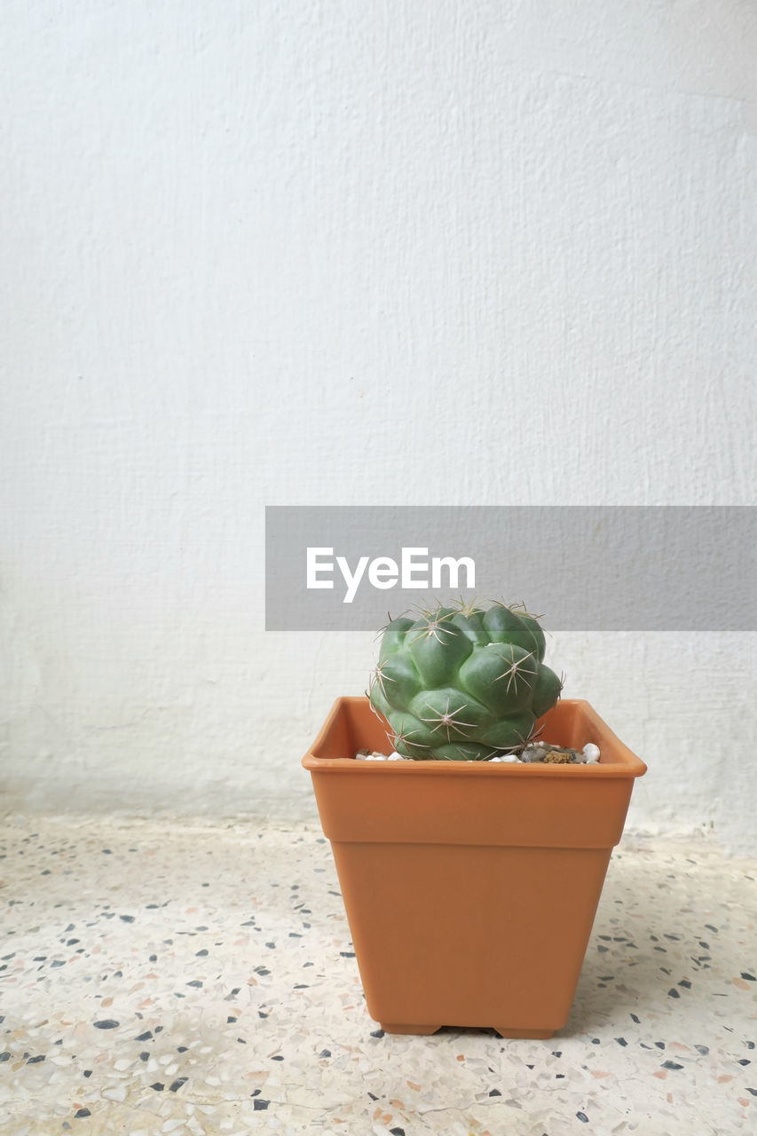 wall - building feature, still life, no people, indoors, succulent plant, potted plant, container, day, food, food and drink, close-up, green color, nature, wellbeing, copy space, plastic, table, vegetable, healthy eating, cactus
