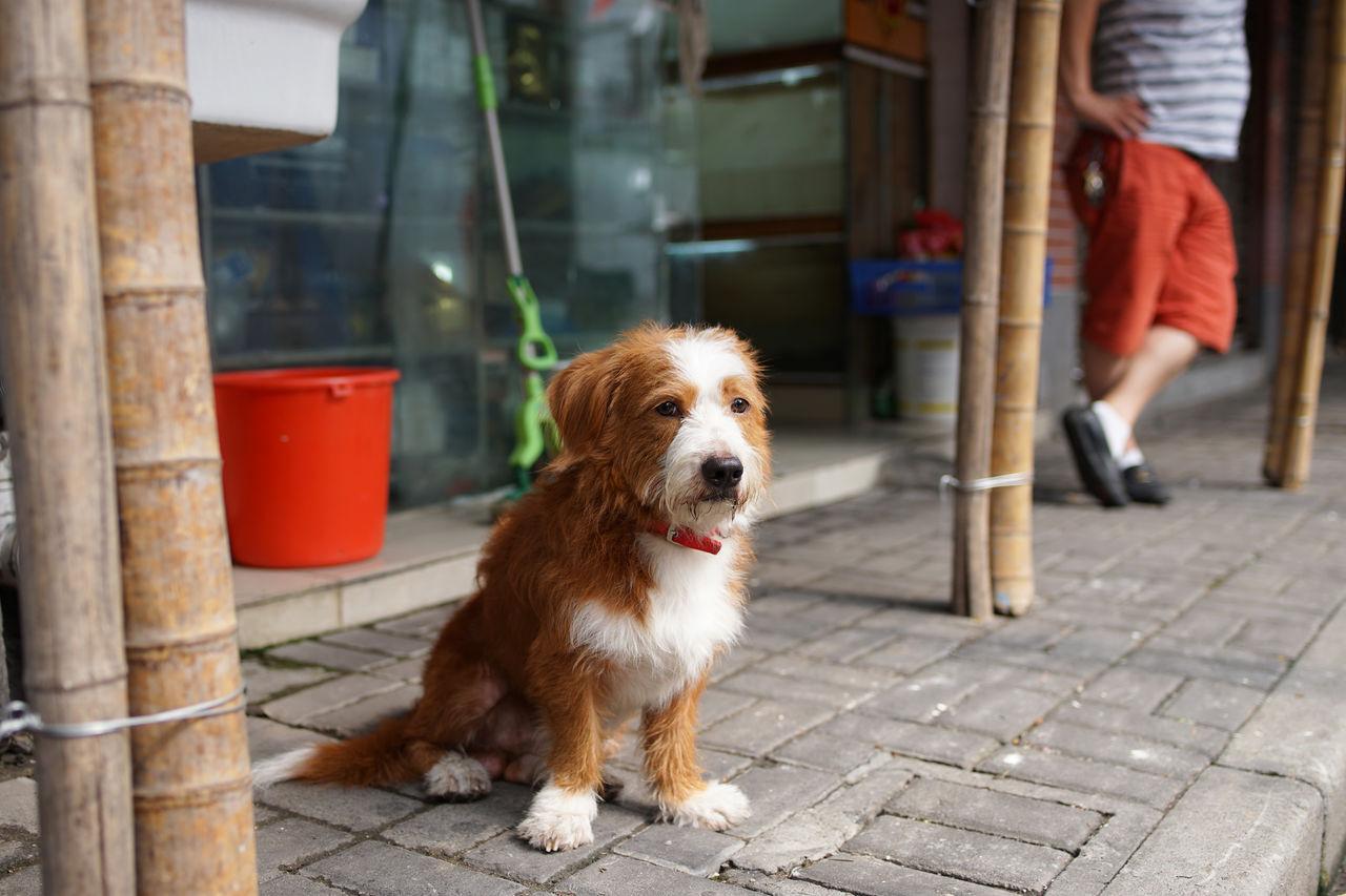 Portrait of dog sitting on sidewalk