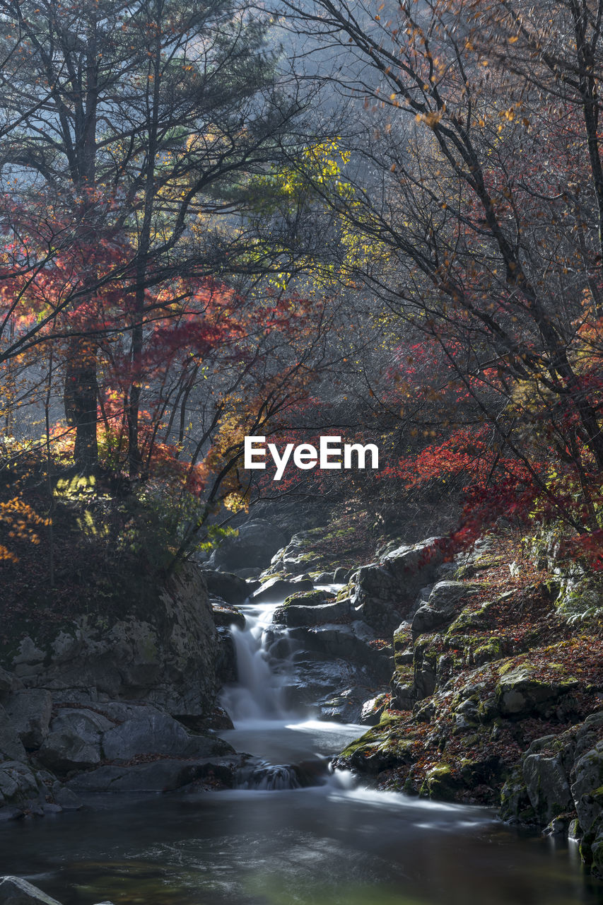 WATERFALL IN FOREST DURING AUTUMN