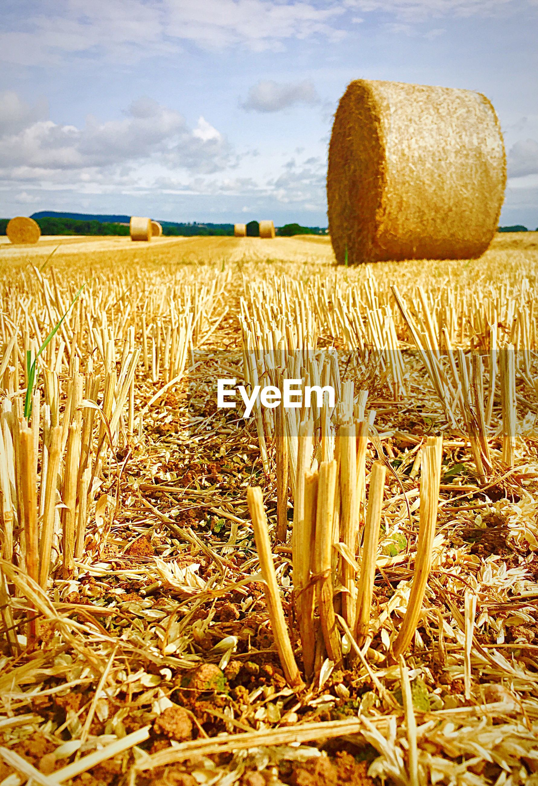 CLOSE-UP OF HAY BALES ON FIELD