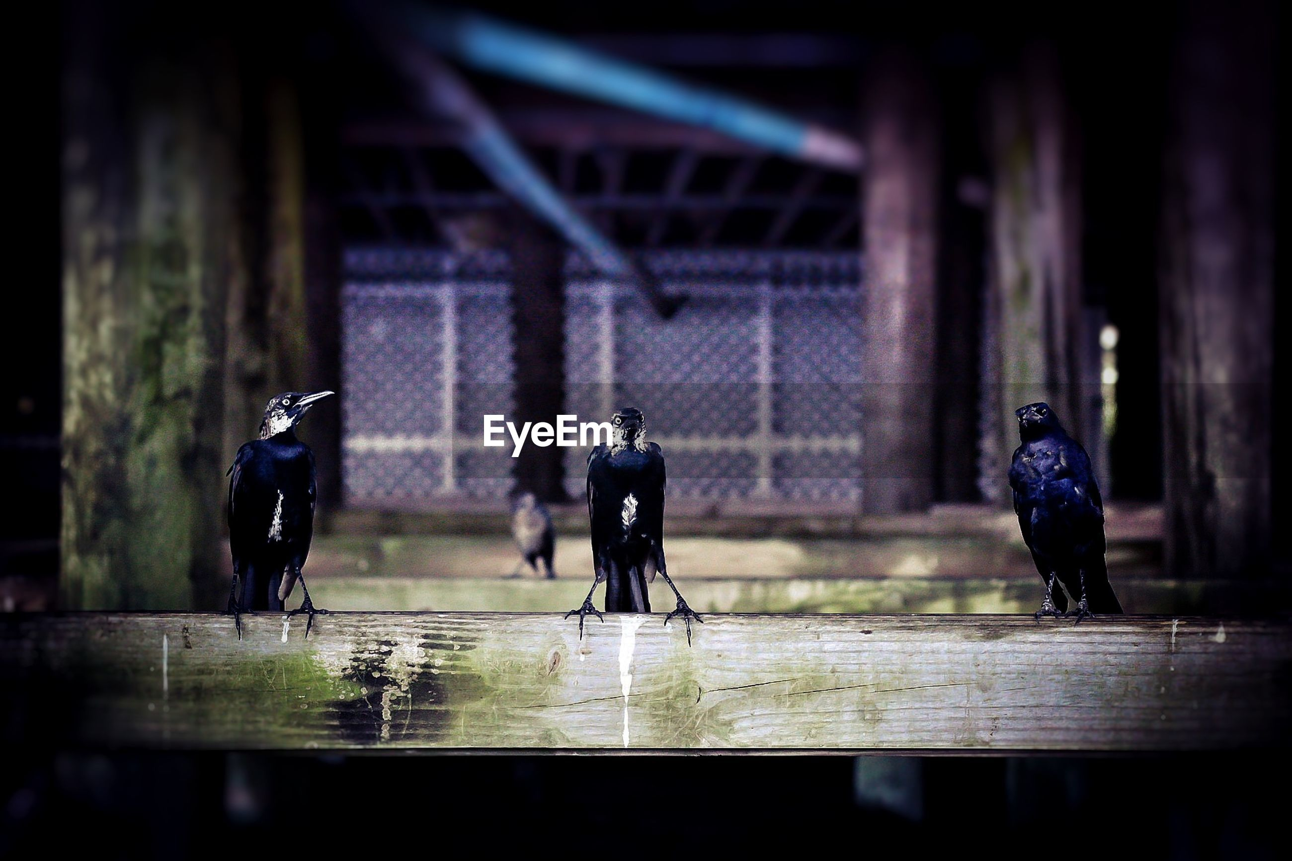 Birds perching on wooden fence