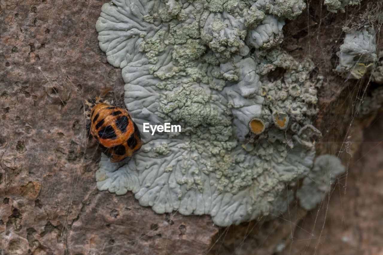 animal themes, animals in the wild, insect, one animal, animal wildlife, no people, day, close-up, nature, outdoors, fragility, beauty in nature, ladybug