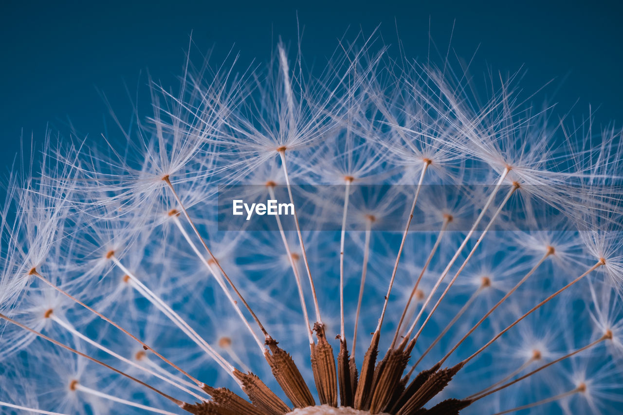 plant, growth, fragility, vulnerability, flower, beauty in nature, dandelion, flowering plant, close-up, dandelion seed, nature, inflorescence, no people, freshness, selective focus, flower head, day, softness, focus on foreground, seed, outdoors, soft focus