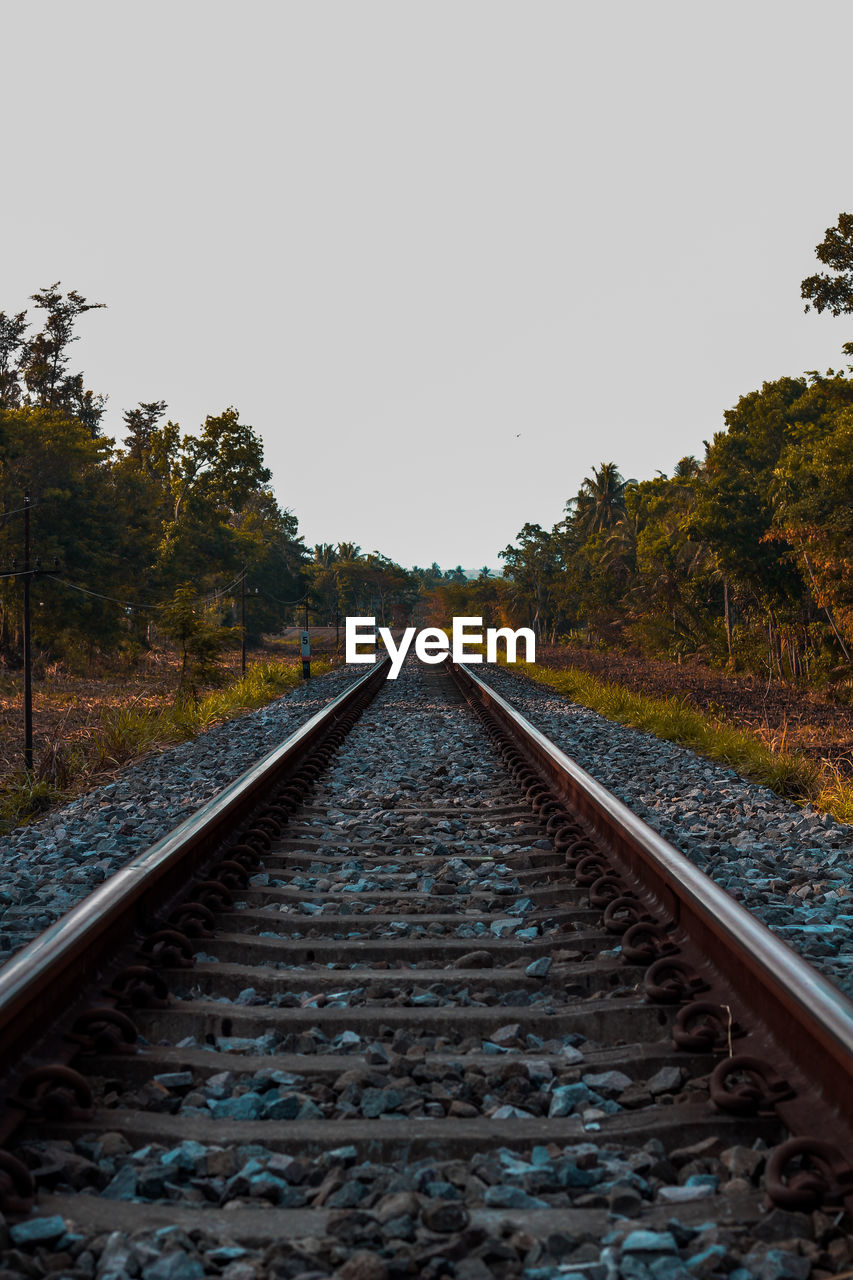railroad track, track, rail transportation, tree, direction, plant, the way forward, sky, diminishing perspective, transportation, clear sky, no people, nature, vanishing point, copy space, day, growth, tranquil scene, non-urban scene, beauty in nature, outdoors, long, parallel, surface level