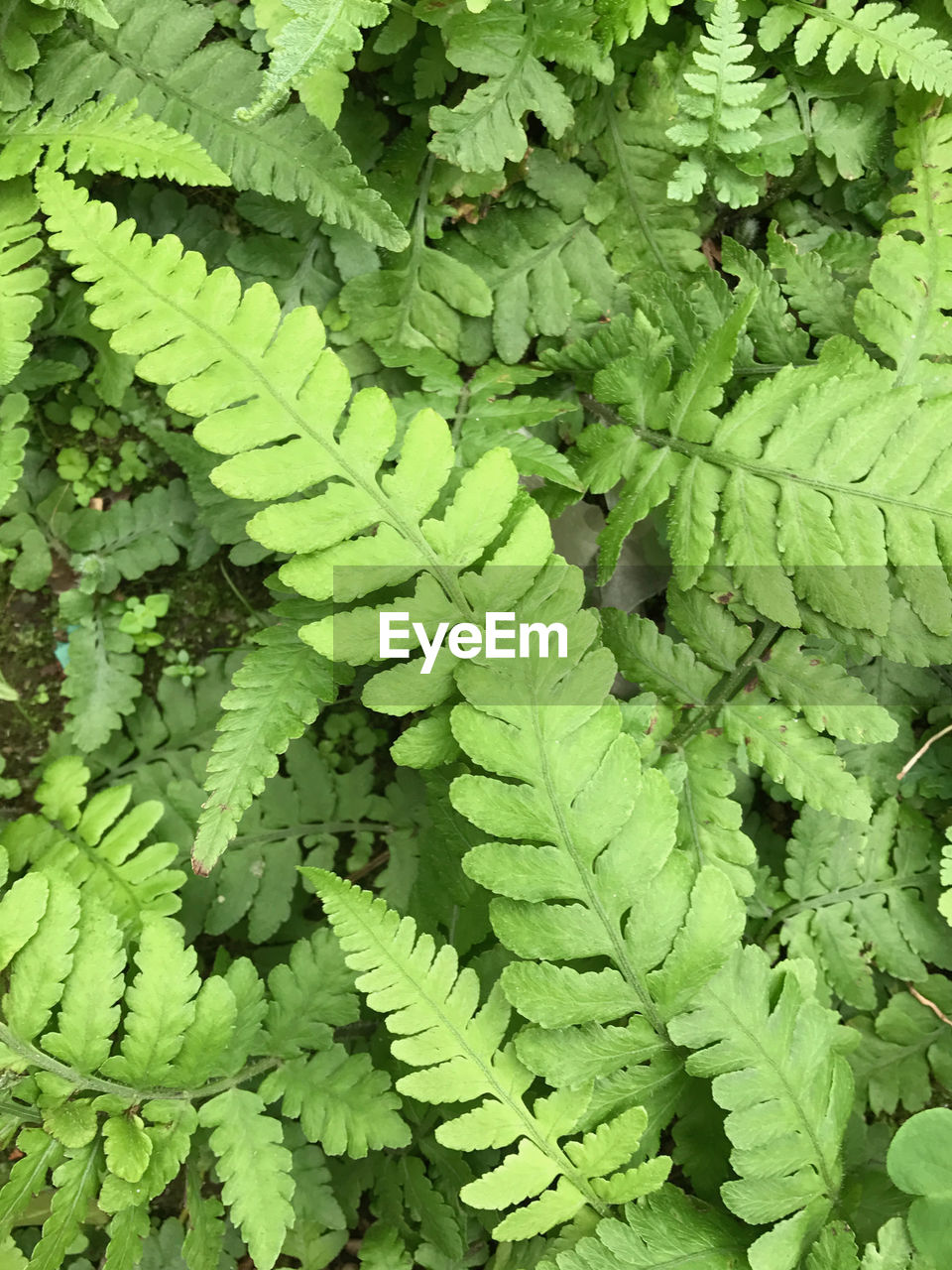 green color, leaf, growth, plant, full frame, day, nature, close-up, fern, backgrounds, no people, outdoors, beauty in nature, freshness, fragility