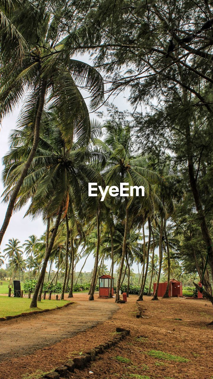 tree, plant, tropical climate, palm tree, growth, land, beauty in nature, nature, day, tranquility, tree trunk, outdoors, trunk, no people, green color, tranquil scene, field, sky, footpath, park, coconut palm tree, treelined, tropical tree