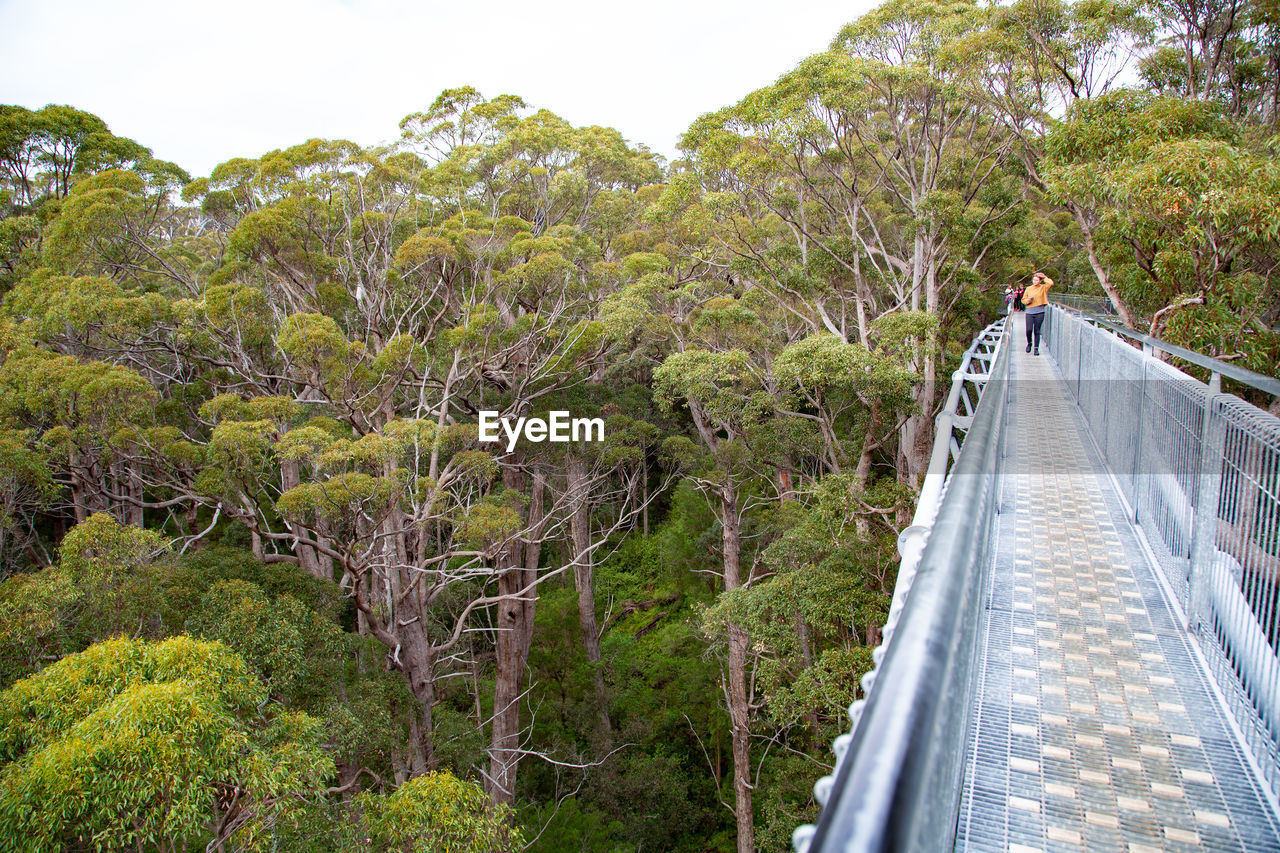 tree, plant, nature, railing, direction, architecture, built structure, the way forward, bridge, walking, real people, one person, transportation, connection, beauty in nature, day, forest, bridge - man made structure, growth, footbridge, outdoors