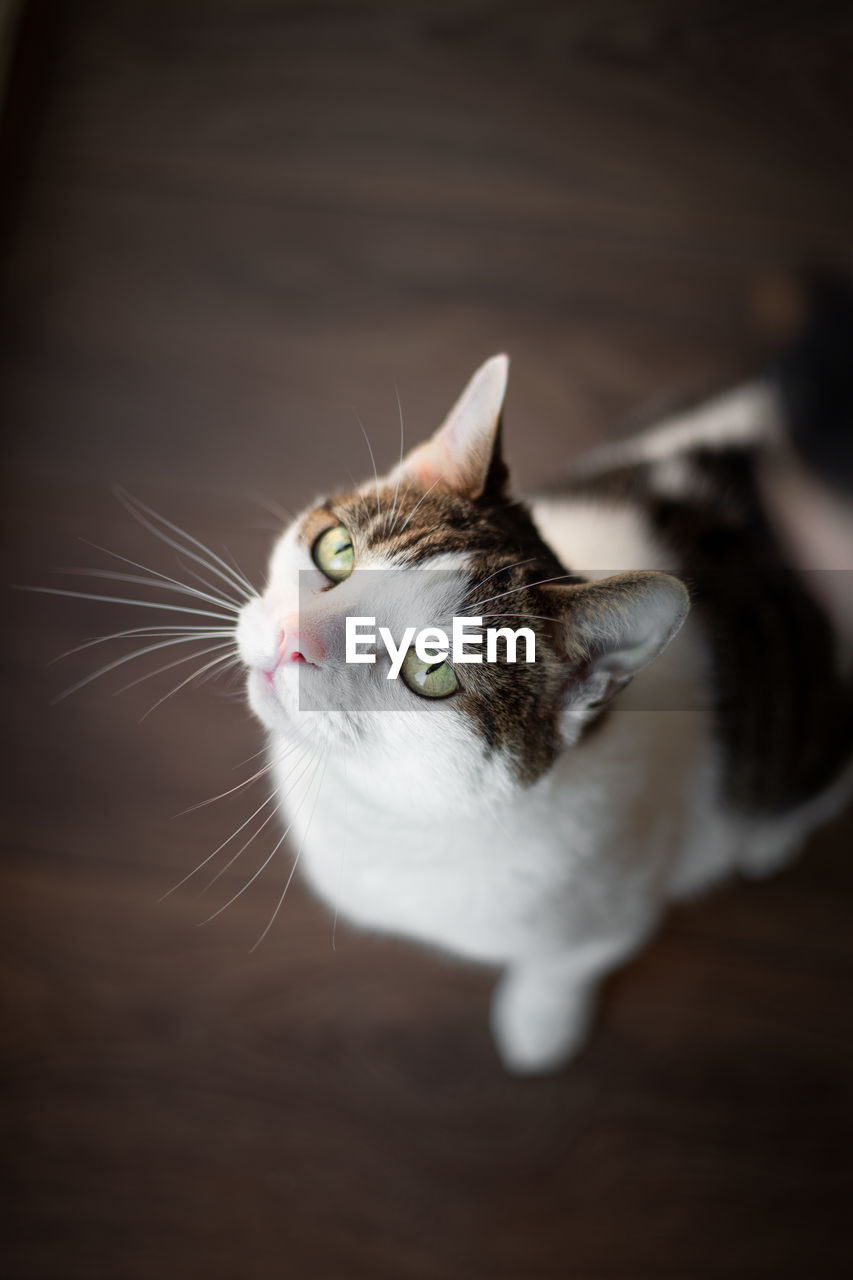 domestic cat, cat, feline, domestic, domestic animals, animal themes, pets, mammal, animal, one animal, vertebrate, whisker, no people, looking, indoors, close-up, animal body part, high angle view, looking away, selective focus, animal head, animal eye
