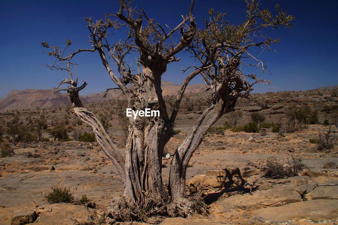 tree, nature, landscape, arid climate, tranquility, rock formation, tranquil scene, no people, day, sunlight, rock - object, branch, beauty in nature, outdoors, scenics, dead plant, bare tree, desert, plant, clear sky, mountain, dead tree, sky