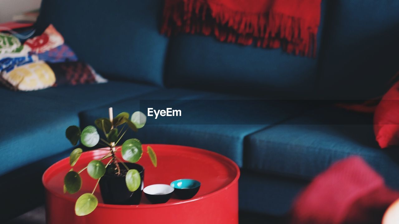 indoors, sofa, table, home interior, close-up, red, flower, no people, freshness, day, flower head