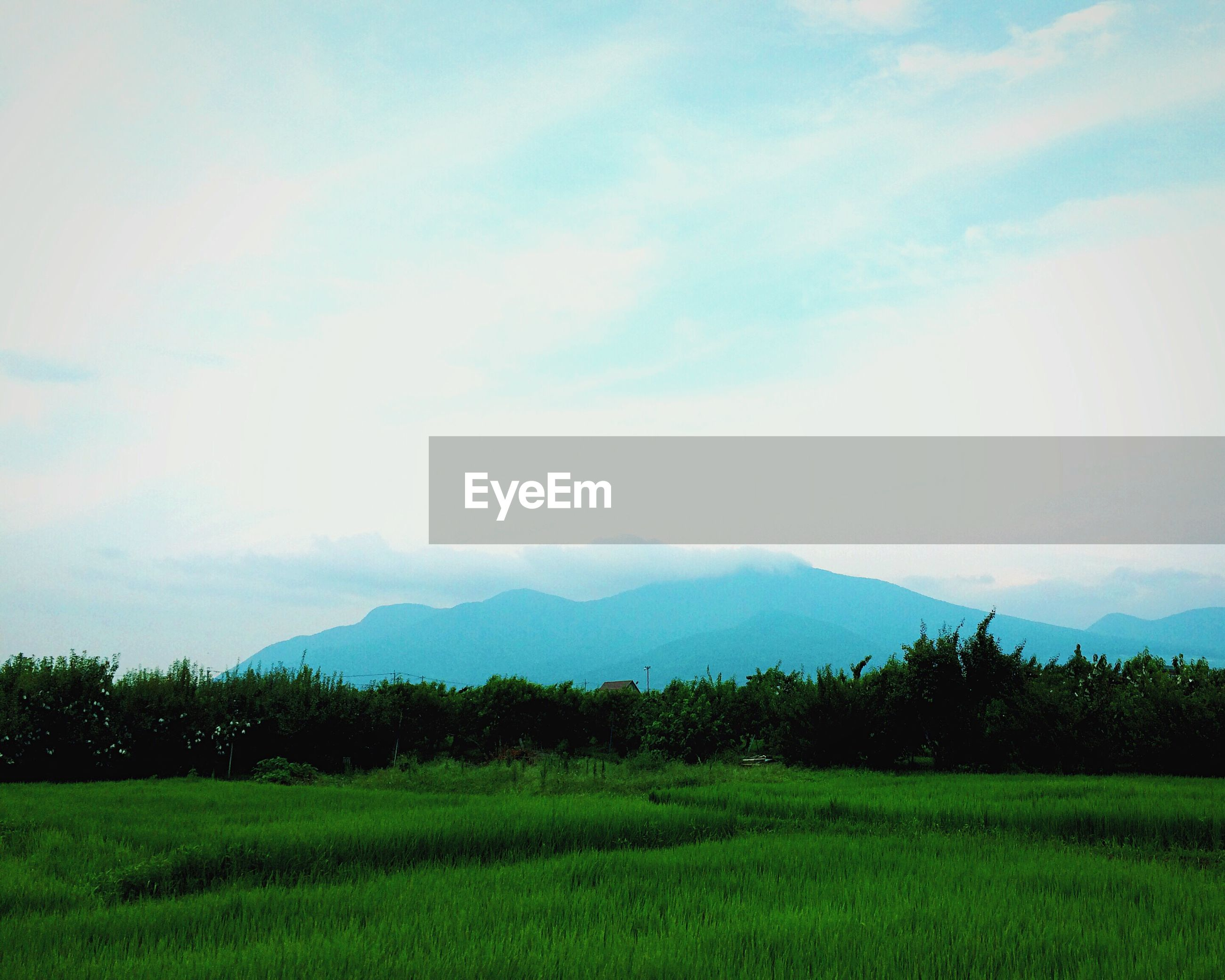 Scenic view of grassy landscape and mountains against sky