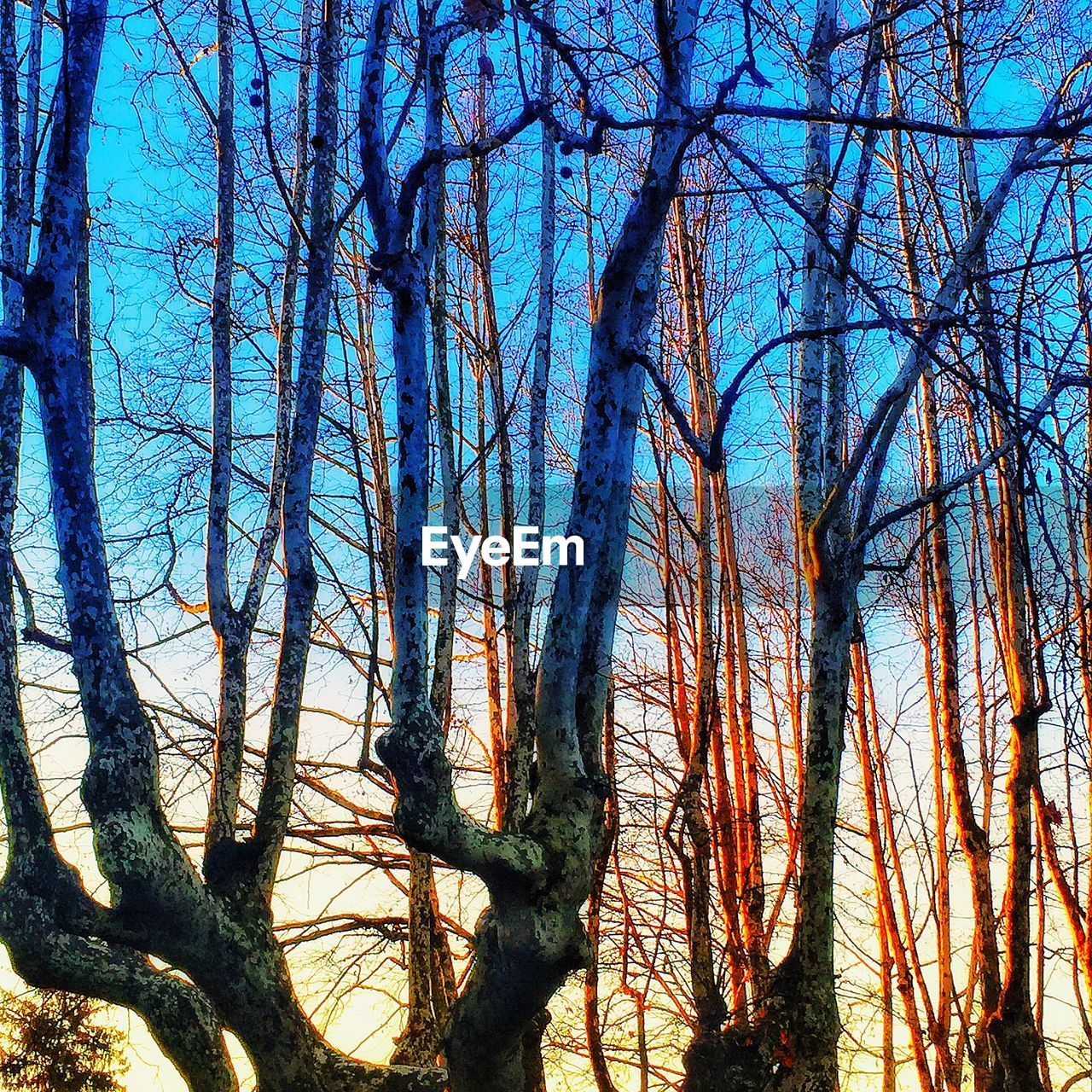 tree, plant, sky, tranquility, nature, bare tree, no people, trunk, growth, beauty in nature, branch, tree trunk, low angle view, forest, blue, tranquil scene, scenics - nature, day, land, outdoors, woodland