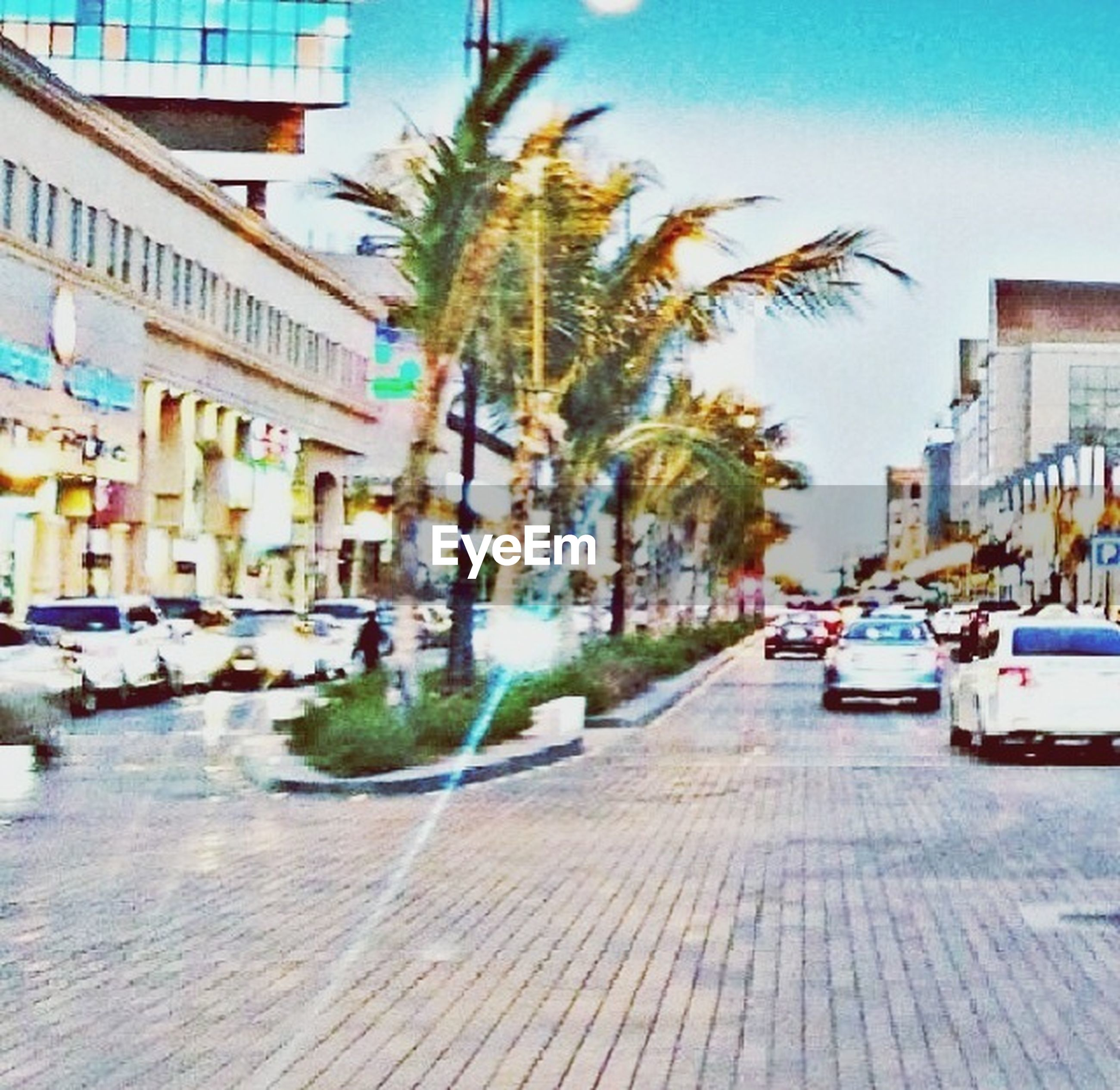 building exterior, architecture, built structure, city, car, transportation, street, palm tree, tree, mode of transport, land vehicle, the way forward, incidental people, city street, road, city life, building, sunlight, residential building, diminishing perspective