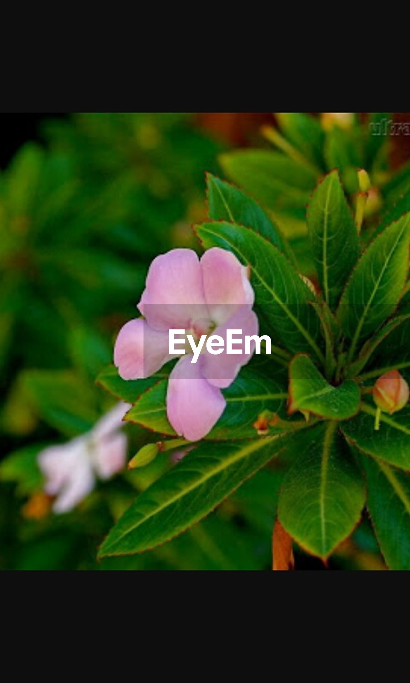 flower, freshness, growth, fragility, petal, leaf, transfer print, flower head, beauty in nature, close-up, nature, plant, blooming, auto post production filter, pink color, focus on foreground, in bloom, blossom, green color, day